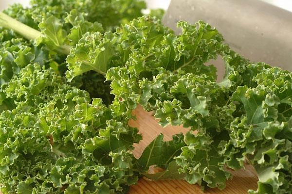 Cải xoăn là 1 trong 10 loại rau củ chứa nhiều canxi trong thực đơn cho bé ăn dặm đó mẹ!