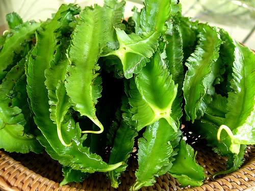 Đậu rồng là 1 trong top 10 loại rau củ chứa canxi trong thực đơn cho bé ăn dặm đó mẹ!