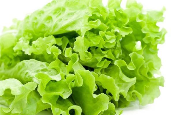 Mẹ có biết rau diếp là 1 trong 10 loại rau giàu canxi trong thực đơn cho bé ăn dặm